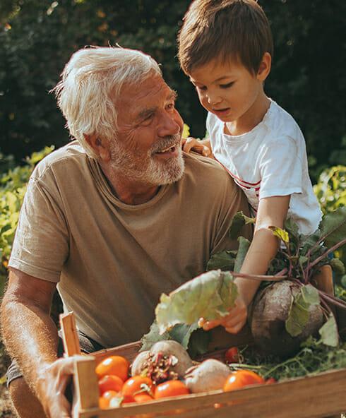 Ein älterer Mann erntet mit seinem Enkel Gemüse
